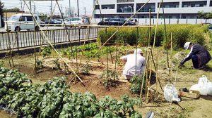野菜の植え付け